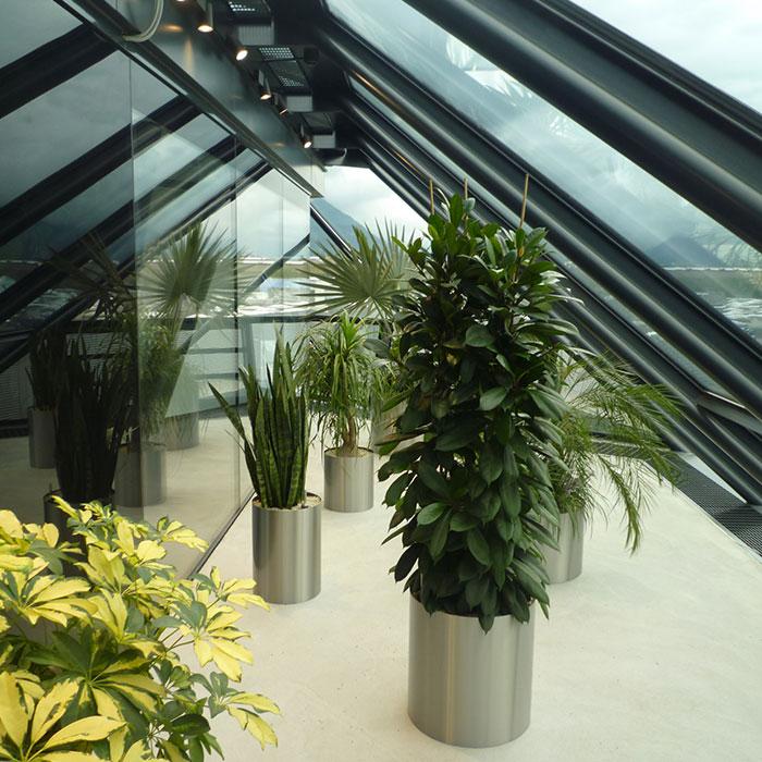 zimmerpflanzen-1
