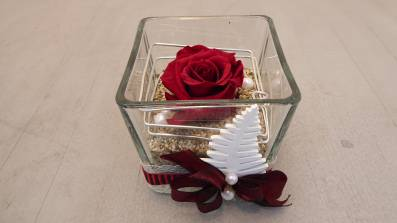Präparierte Rose