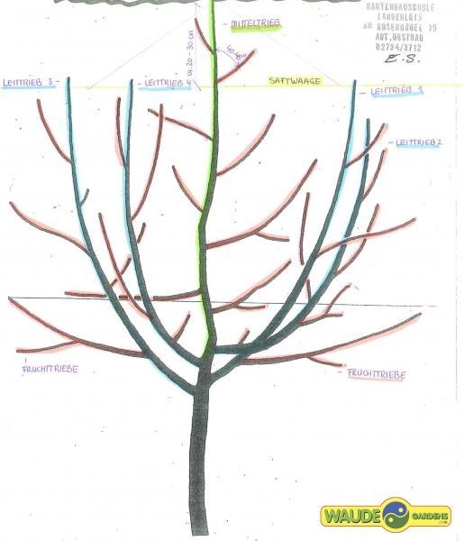 Ganz und zu Extrem Obstbaumschnitt @IM_87